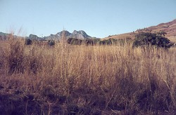 Landscape south of Ambalavao