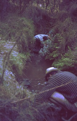 Looking for frogs in a stream: Antsampandrano Forestry Station