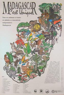 Madagascar: C'est Unique: Tous ces animaux et toutes ces plantes se rencontrent uniquement ? Madagascar