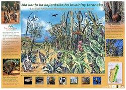Spiny Forest Poster: Ala kanto ka kajiantsika ho lovain'ny taranaka / Let's all help save Madagascar's beautiful forests