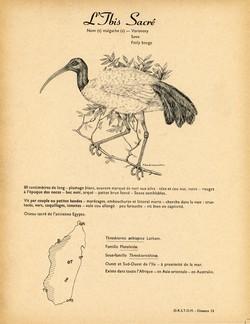 13. L'Ibis Sacré / 14. L'Ibis Huppé ou Ibis à Cimier