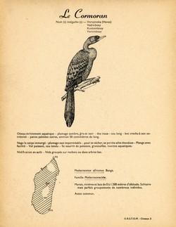 3. Le Cormoran / 4. L'Anhinga ou Oiseau-Serpent