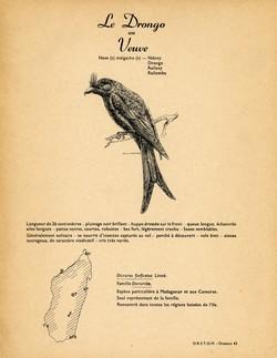 43. Le Drongo ou Veuve / 44. L'Artamie à tête blanche
