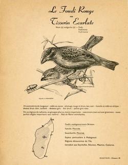 49. Le Foudi Rouge ou Tisserin Ecarlate / 50. Le Foudi Sakalave ou Tisserin Sakalave