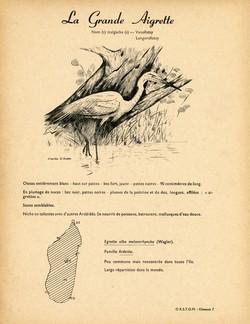 7. La Grande Aigrette / 8. L'Aigrette Dimorphe