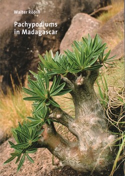 Pachypodiums in Madagascar