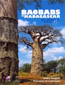 Baobabs de Madagascar: Les arbres ? l'envers