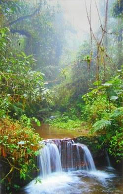 Waterfall in Ranomafana National Park