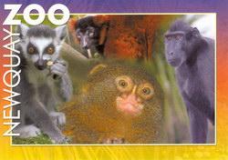 Primates Postcard: Ring-tailed Lemur, Red-ruffed Lemur, Pygmy Marmoset, Black Ape