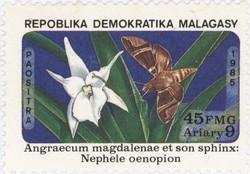 Angraecum magdalenae Orchid and Nephele oenopion Hawk Moth: 45-Franc (9-Ariary) Postage Stamp