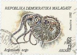 Argonauta argo: 65-Franc (13-Ariary) Postage Stamp