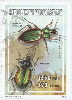 Carabus auratus and Calosoma: 1,350-Franc (270-Ariary) Postage Stamp