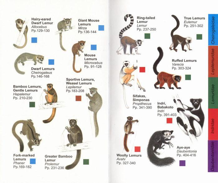 Madagascar 3 Lemur Song Lemurs | Sloths, slow ...